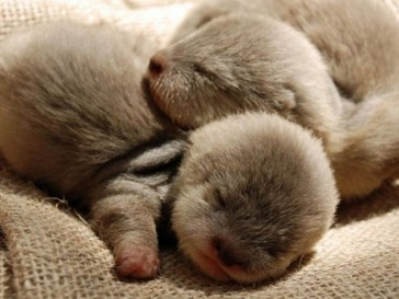 baby-otters-cute-pictures-animal-pics-600x450