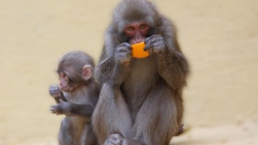monkey-food-777x437