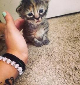 purrmanently-sad-cat-5234-1404700243